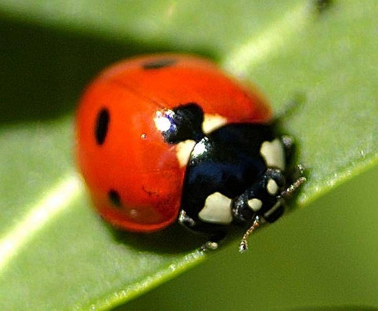 Sensibilisation la presence d 39 insectes utiles au jardin f te des courges - Petit insecte rouge jardin besancon ...